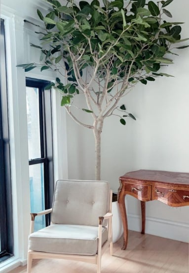 Clarity Therapy office showing a therapist's chair, side table and ficus tree in a sun-drenched window.